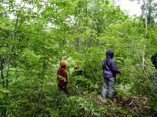 【初級講座】「森林実習」vol.1 森の手入れ