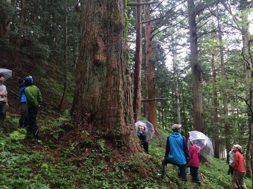 【初級森林実習】森と暮らしをつなぐ人になる。その1